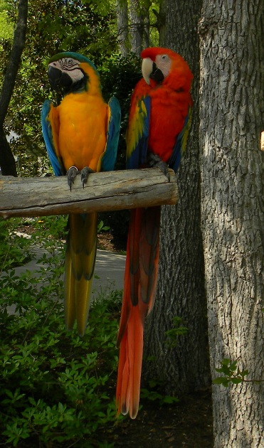 Large Colorful Tropical Birds